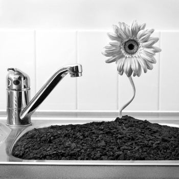 There is a flower in the sink by Volundur