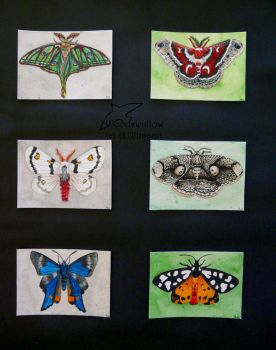 Butterflies of the world - complete by Woodswallow