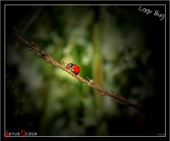 Lady Bug by A-DD