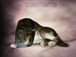 3D object - tabby cat sad by AzurylipfesStock