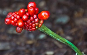 Berry Cluster by sequential
