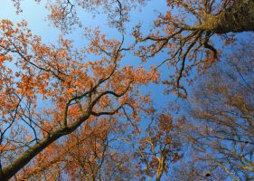End of Autumn 2012 by YunaHeileen