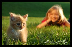 The Joy of a Kitten by AmvoyPhotog