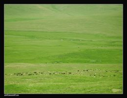 grazing by abart