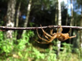 The itsy-bitsy spider by matchieck
