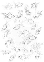 Fish Study Sketches by amwah
