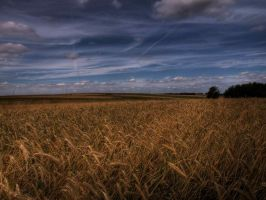 Grain field 2 by DOTTHL