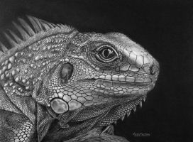 Iguana by Greyfell-Fine-Art