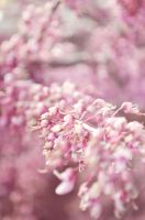 In Bloom by TayMcKayPhotography