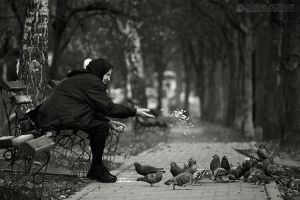 Feeding the birds by adypetrisor