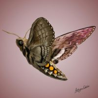 Moth by froggywoggy11