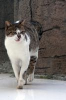 Angry cat by Boria666