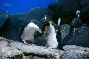 Penguins by Saher4ever
