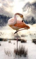 Flamingo at the Snow by bruno-sousa