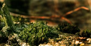 Moss_var2 by Tho0or