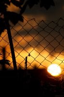 Behind the fence by Oberon7up