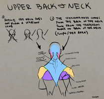 Anatomy Tutorial: Upper Back and Neck by KrausC