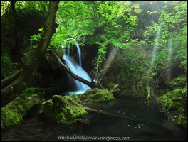 Where fairies come to dance by Ioan-Stoenica
