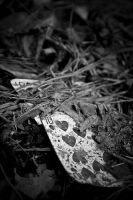 House Of Cards IV by d3b-ph
