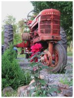 Rose and Tractor by CrystalMarineGallery