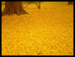 sea of yellow leafs by carrolsmith
