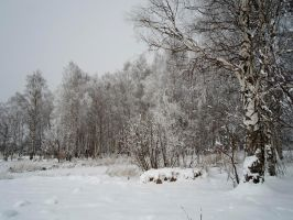 Winter forest 613 by MASYON