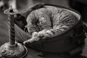 Camera Bag Candlestick and Cat by clippercarrillo