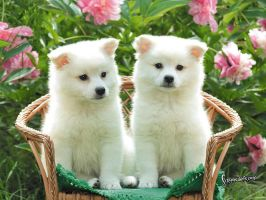 30-cute-puppies-you-will-want-to-take-home-with-yo by mody-hashim
