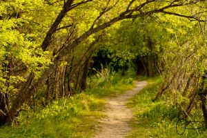 Down This Winding Path by TigerLilyKisses