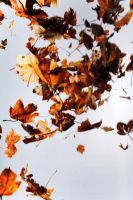 Floating leaves 004 by ISOStock