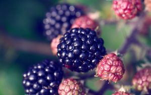 Blackberry 2560x1600 by hermik