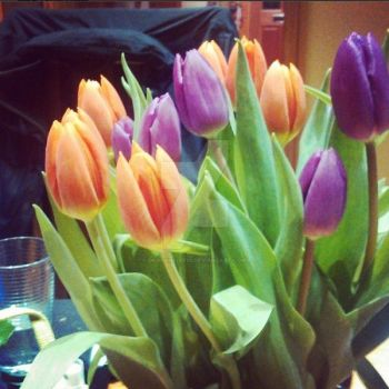 Tulips by dragonfire70