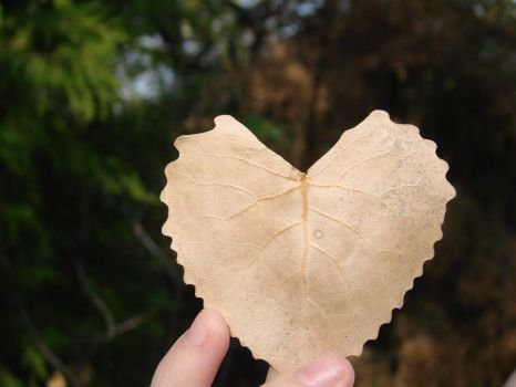 Heart Leaf by xxlittlesarahxx