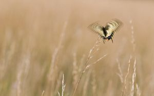 fly away I by mescamesh