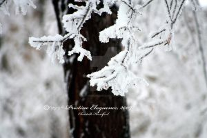 December's Snow by PristineEloquence