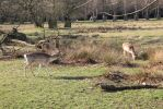 Deer in action by jonstuttard123