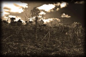 Dry Forests by miduntramp