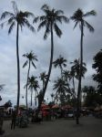 COCONUT TREE 1 by diimaaz