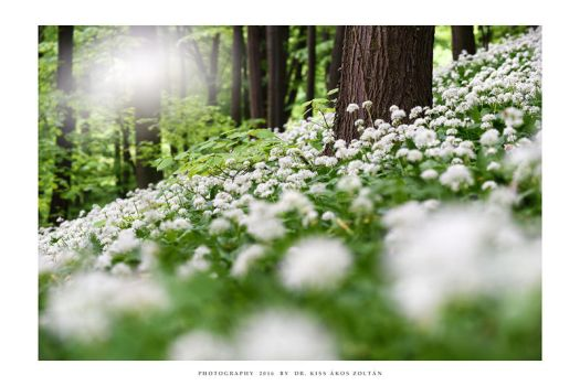 Springtime carpet - II by DimensionSeven