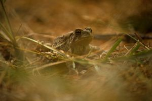The Toad August - 2014 - 19 - 1 by toshema