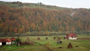 autumn is here by nicelandscape