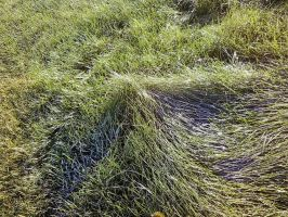 Grass by Yeazz