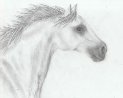 horse head closeup by xilovehorsesx