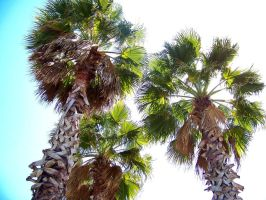 palm tree's by hollybolly95