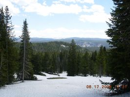 Snowy Yellowstone Forest 2 by KayJay777