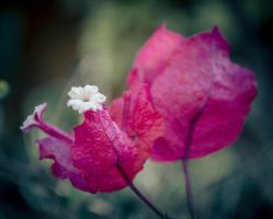 Pink Leaves by Nathan-Ruby