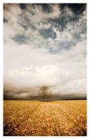 Single Tree by jfphotography