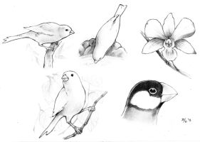 Nature Sketches 1 by MondoArt