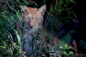 Lurking... by Seb-Photos