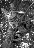 kitty in a tree by leahmcdonald